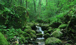 La selva colombiana