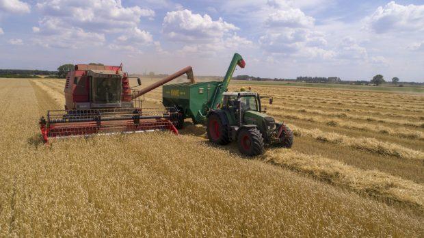Coltivazione grano